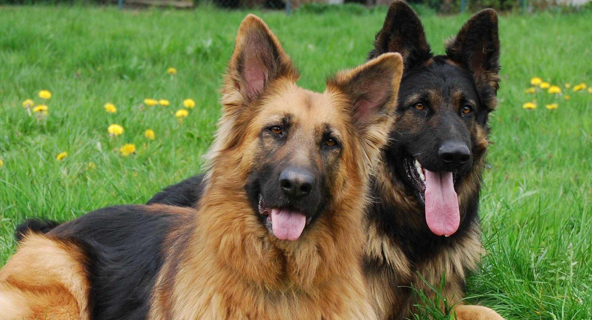 Hundeschule Ratz und Rübe
